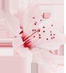 flower_5 (Demo)